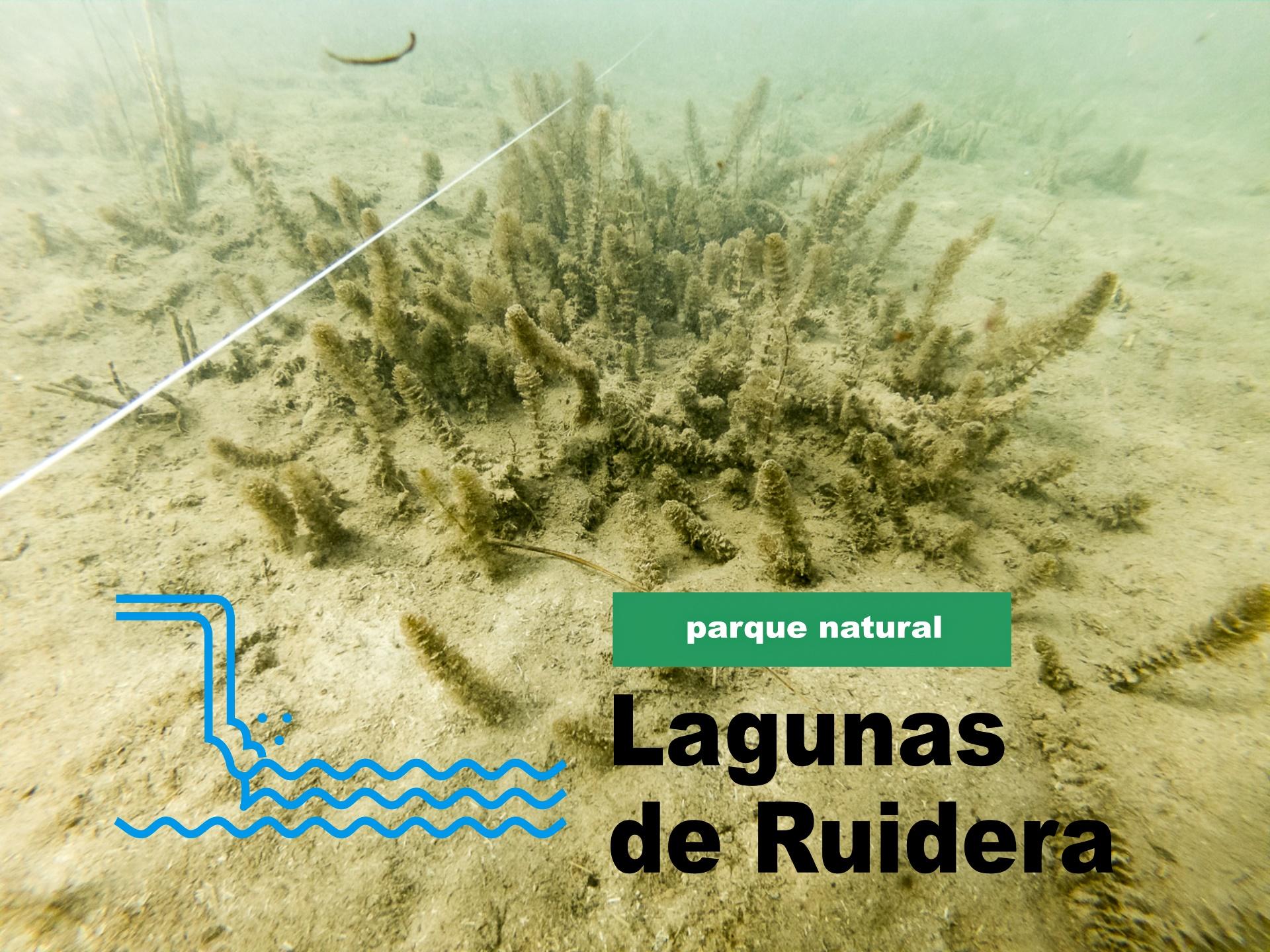 Transecto en la laguna Conceja y Logotipo del Parque Natural de las LAgunas de ruidera