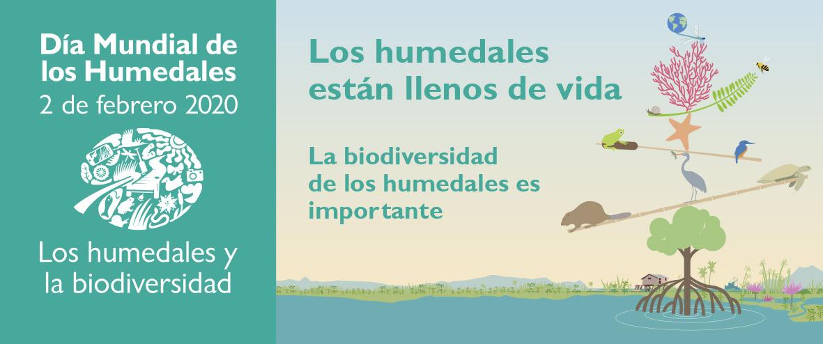 DíaMundial de los Humedales RAMSAR 2020. Los humedales están llenos de vida. La biodiversidad de los humedales es importnte.
